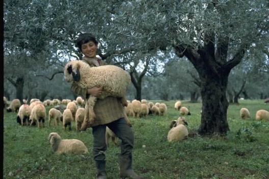 bekaa_shepherd