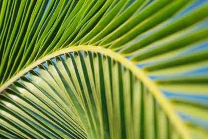 palm-sunday-long12